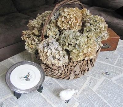 drying hydrangea