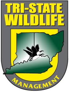 Tristate Wildlife Management