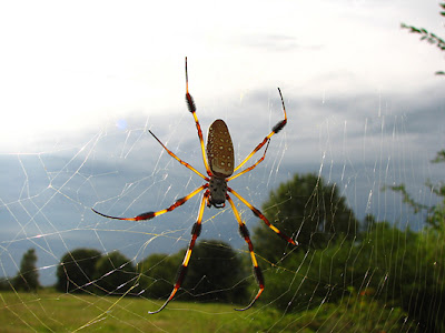 Significado dos Sonhos com Aranha Grande