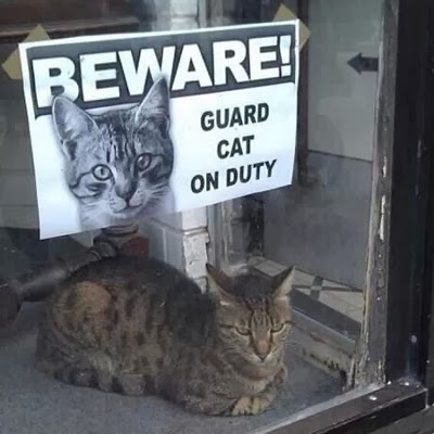 http://peterjaussie.tumblr.com/post/74670053079/guard-cat