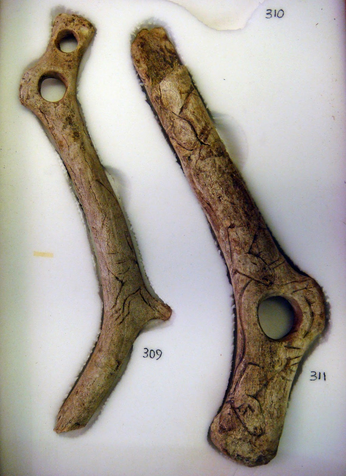 https://commons.wikimedia.org/wiki/File%3AUpper_paleolithic_reindeer_antler_tools_with_figurative_art.jpg