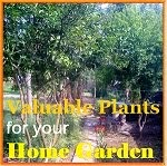 Valuable Plants for Home Garden