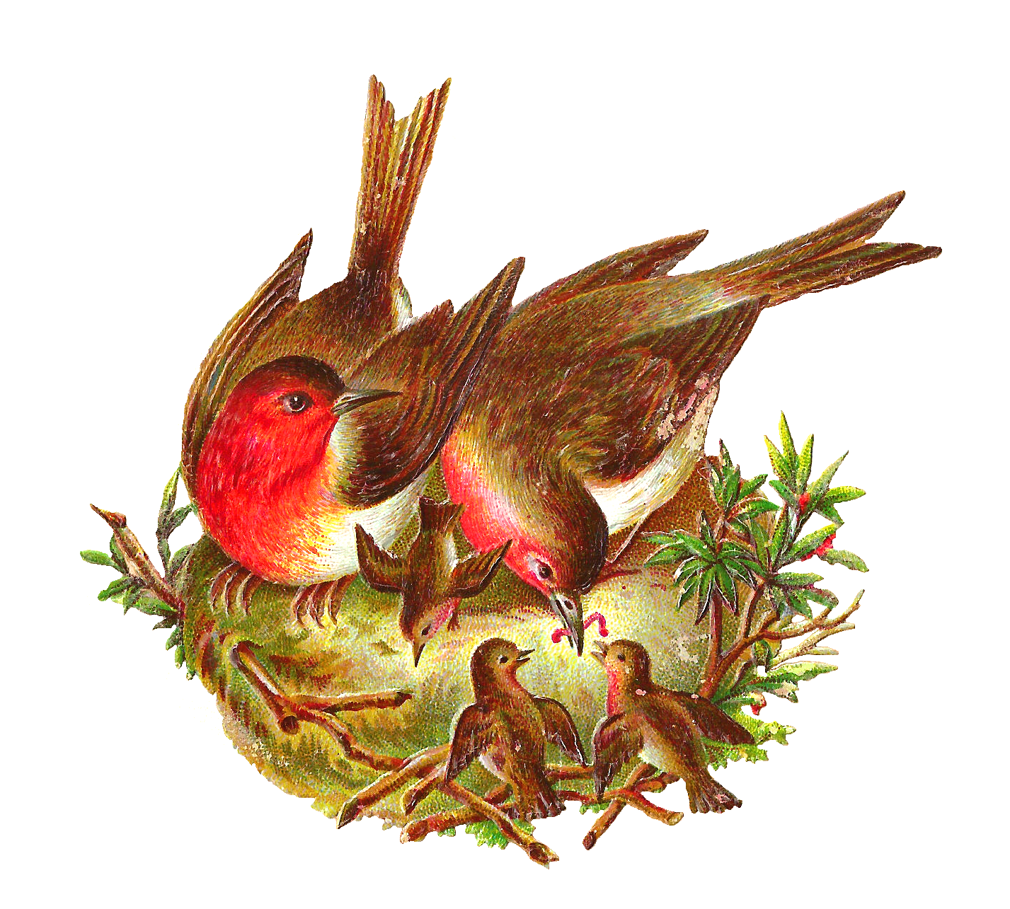 Antique Images: Free Bird Graphic: 2 Birds in Nest Feeding Baby Birds ...