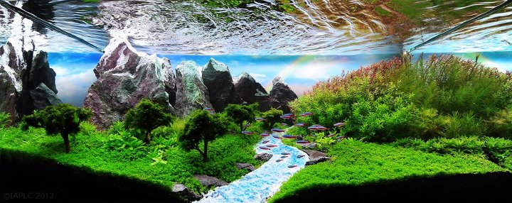 Aquascape Termahal Favorit 1 di IAPLC Aquascape Aquarium ...