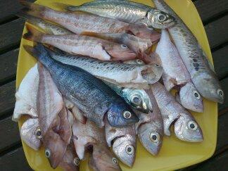 Limpieza Segura Y Observaciones A Tener En Cuenta Con Los Pescados