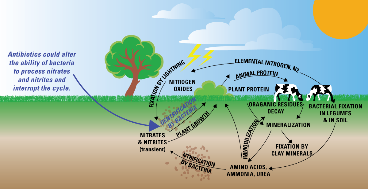 ... Cantu 8th Grade Honors Science Water Cycle Diagram For 6th Grade U Grade Cattle
