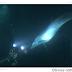 Delfín pide ayuda a un submarinista. Vídeo