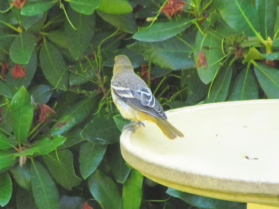 back of bird on bath another view