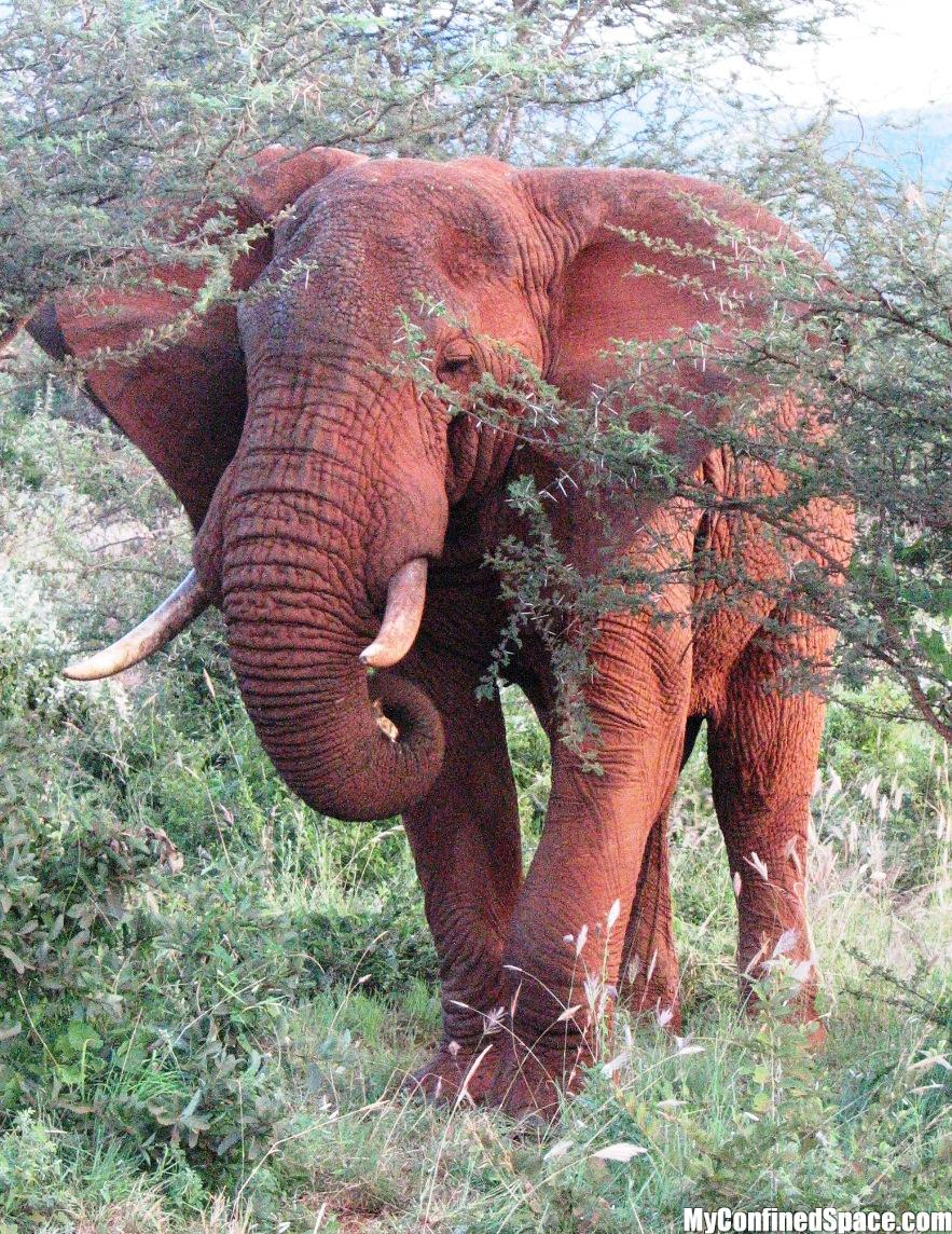 red traditional elephant - photo #8