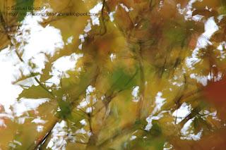 couleurs automnales dans la nature