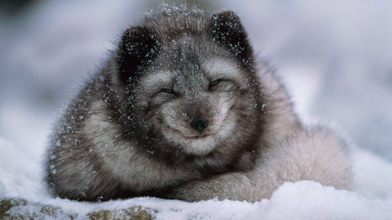 animals funny cubs smiling - photo #16