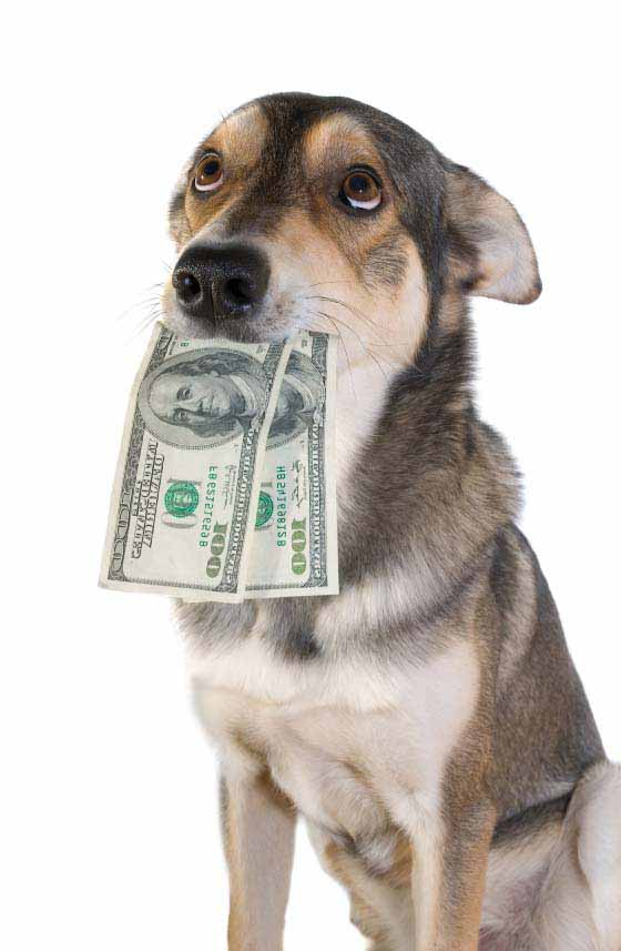 Can You Make Money Boarding Dogs