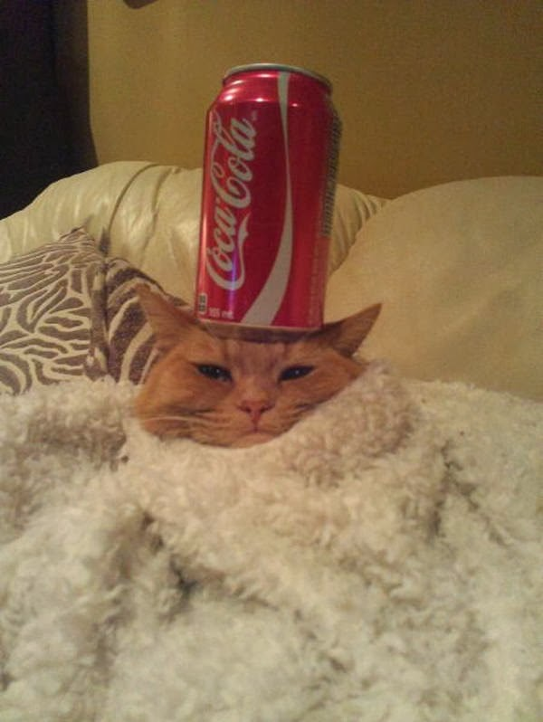 Funny cats - part 91 (40 pics + 10 gifs), cat balancing soda can on his head