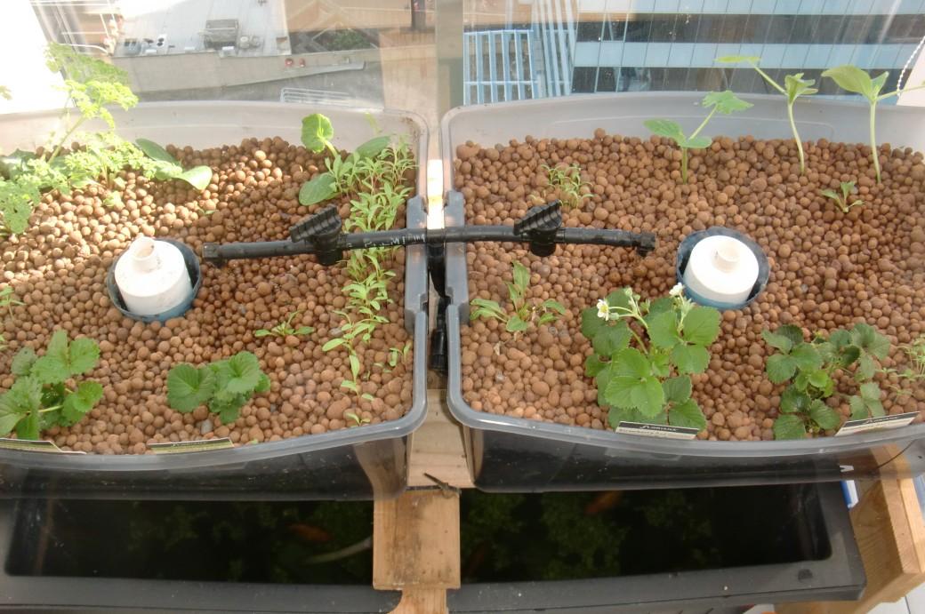 Urban green survival aquaponics - Potager sur balcon terrasse ...