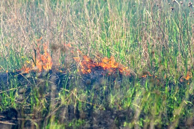 prairie restoration controlled burn