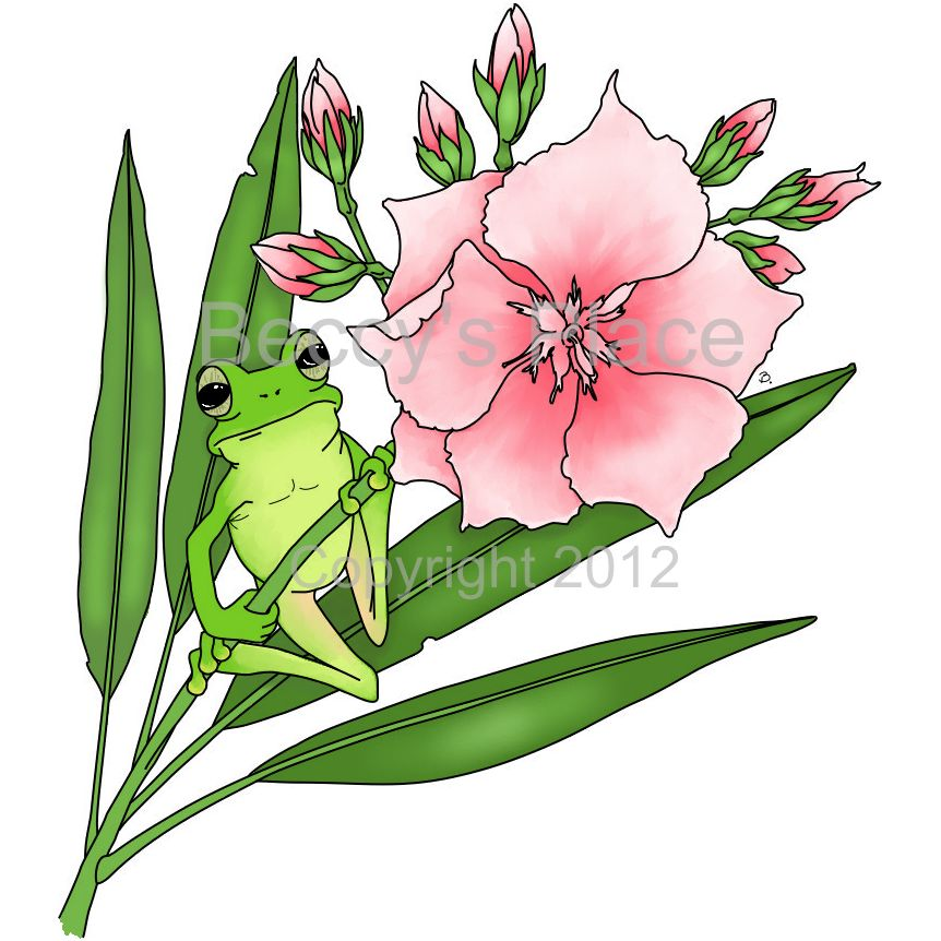 Gallery For gt Oleander Flower Drawing