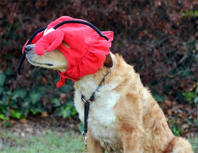 Brisbane in a lobster hat