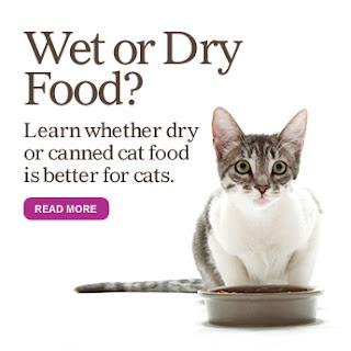 Lựa chọn thức ăn ướt cho mèo. Ảnh minh hoại