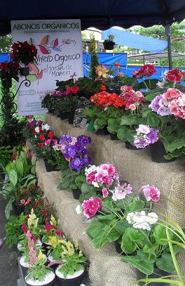 Vivero organico jardin de mariela for Vivero organico