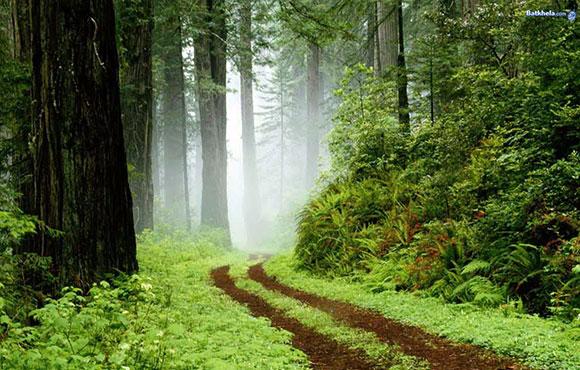 خلفيات الغابات , خلفيات نوكيا
