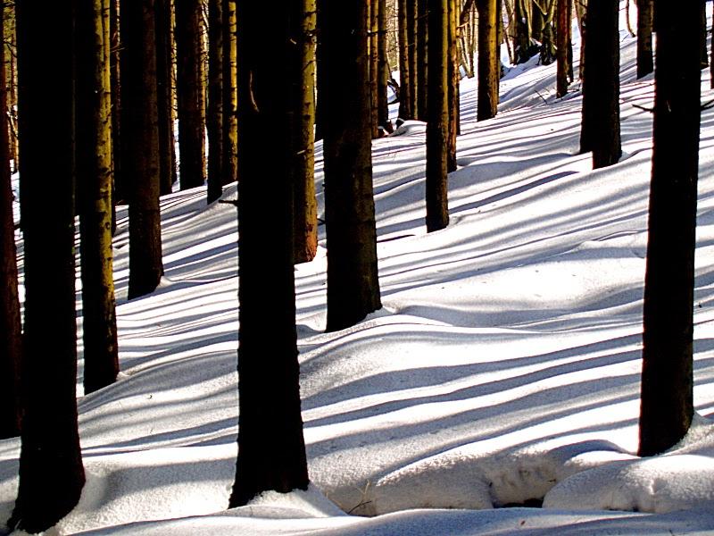 Brasimone: strisce di sole nella pineta