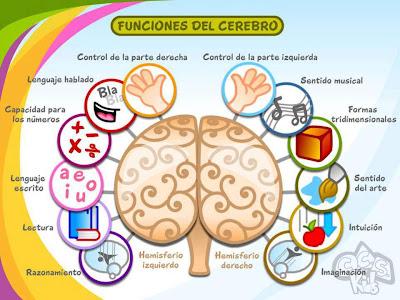 Funciones de los hemisferios cerebrales izquierdo y derecho