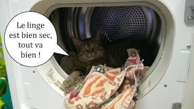 Un chat dans le sèche-linge.