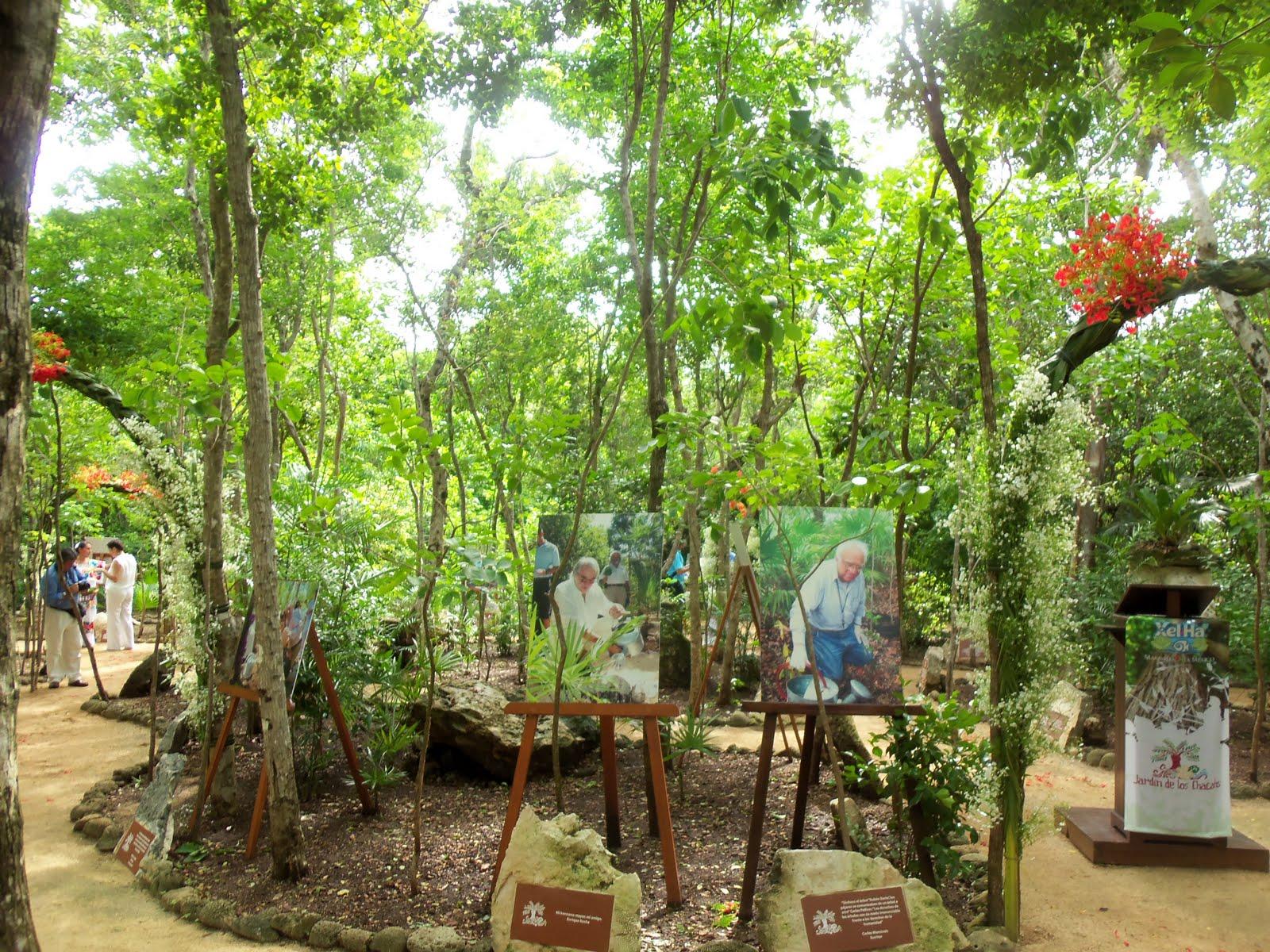 Impulsan compromiso por un planeta verde en xel ha for Jardin xel ha