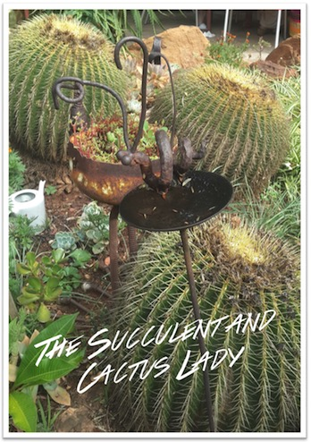 The Succulent and Cactus Lady (that's me!)