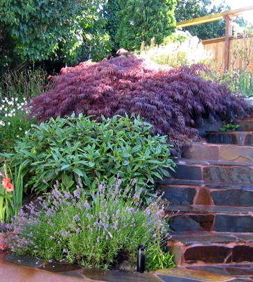 Seattle garden ideas rockery plants part 2 for Japanese planting ideas