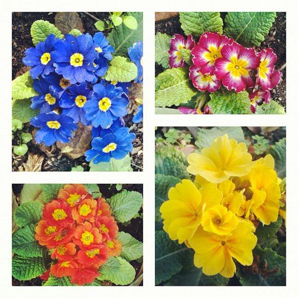 Flowers Pablo Lara H Pansy