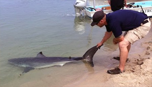 Shark Rescue: Beachgoers Help Save Stranded Great White