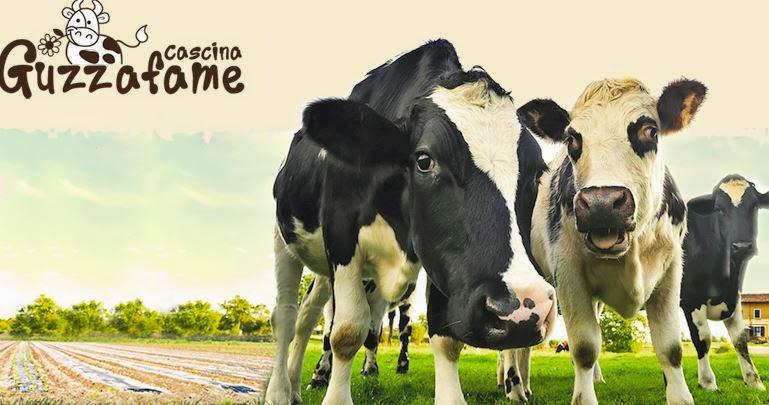 Cascina Guzzafame 2014