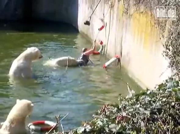 Do polar bears eat humans - photo#19