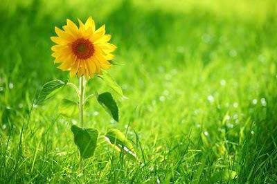 我們要讓這顆心,每天慢慢去行,每天為眾生服務,這就是現世的菩薩。所謂「初地菩薩」,就是「歡喜菩薩」,每天在生活上、在工作中,都能歡歡喜喜,不光是嘴巴笑,而是發自內心充滿微笑。你可以試試看,早上起床後,從心裡面覺得法喜。這份歡喜心,能帶動歡喜的血液流暢全身,讓全身每個細胞都得到這種歡喜的營養,這就是人生修行要點。~禪宗第八十五代宗師 悟覺妙天禪師