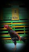PEJANTAN UTAMA Bloodline 1600cc by SN (Mulai jadi pemacek th 2017)