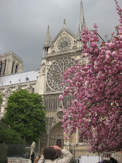 Pink flowers in front of Notre Dame