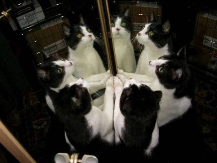 Funny cats - part 175, funny cat pictures, cat photo, cute cats