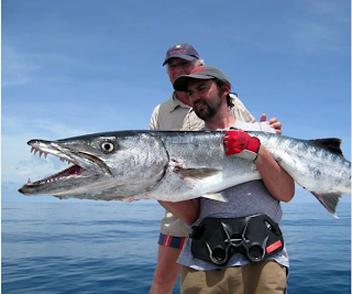 Big fishes of the world barracuda great page 2 for Largest saltwater fish