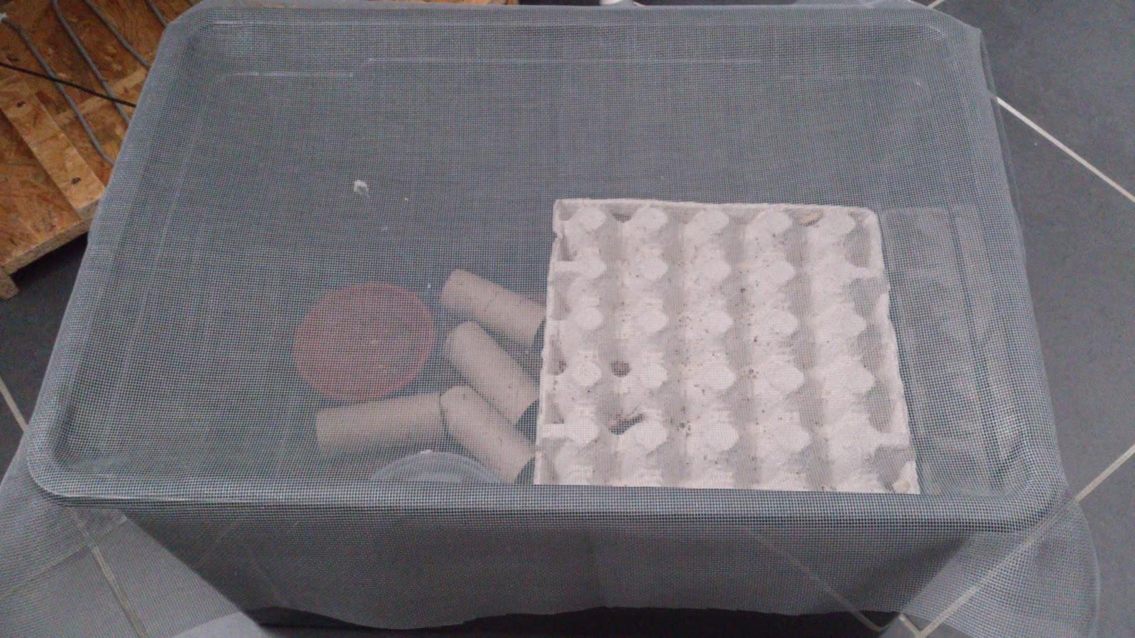 m 39 gecko elevage de blattes une bonne raison d 39 avoir le cafard. Black Bedroom Furniture Sets. Home Design Ideas