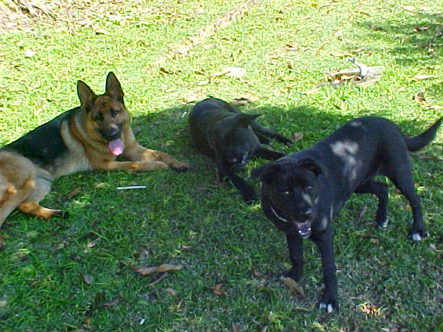 Inga, Sansão e Dalila