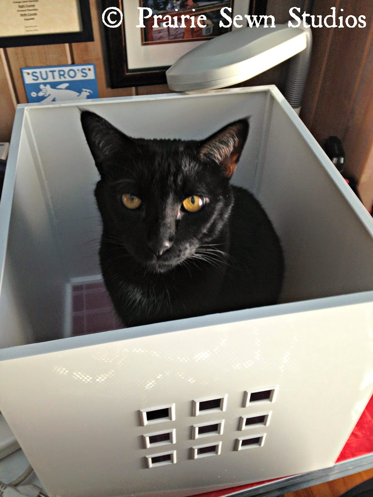 Cat in ikea box