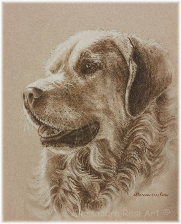 Dog portrait drawing in sepia pencil