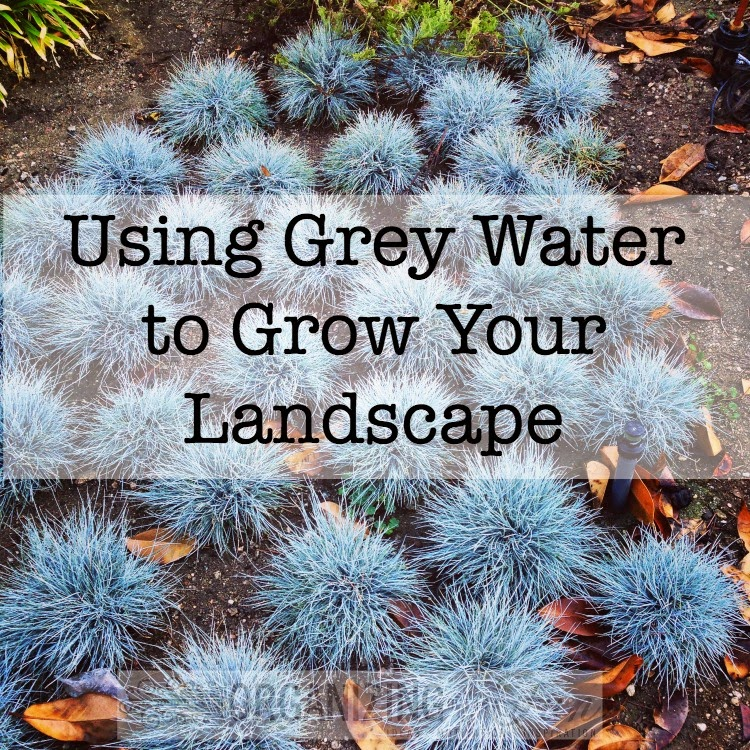 Using Grey Water to Grow Your Landscape :: OrganizingMadeFun.com