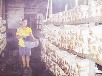 Budidaya Jamur Tiram di Ngrejeng, Potensi Jadi Produk Andalan