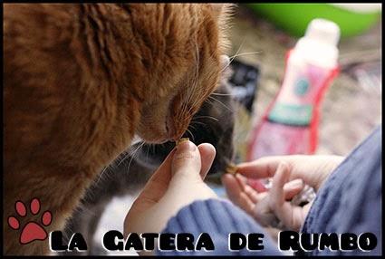 Comiendo CatKisses