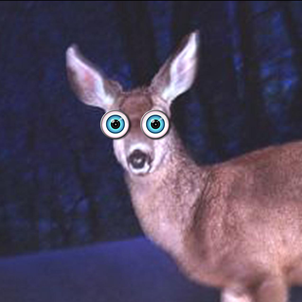 deer in the headlight look