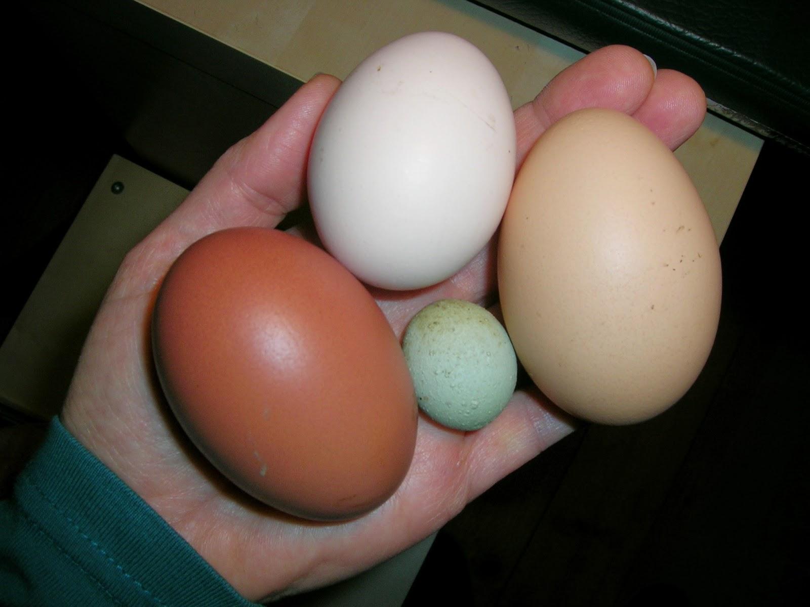 Grünleger, Mini-Ei