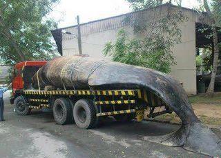Biggest Fish  World on Welcome To Ladun Liadi S Blog  World   S Largest Fish