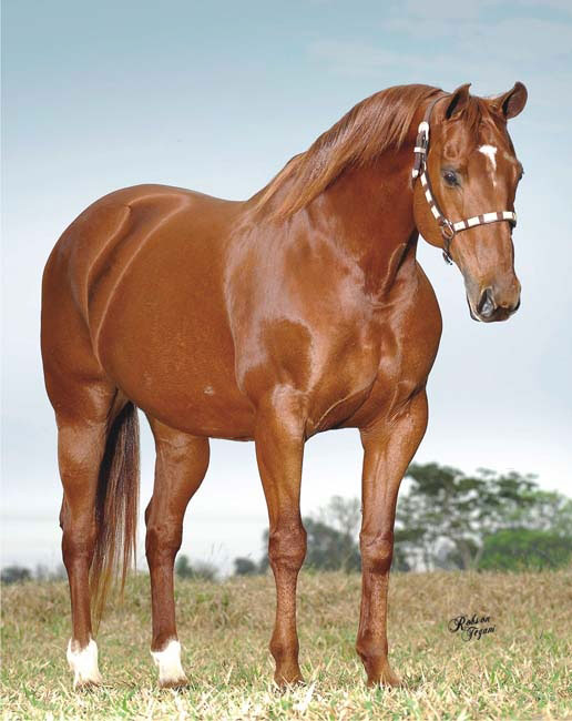Raças de Cavalos Quarto de Milha QM ~ Wallpaper Cavalos Quarto De Milha